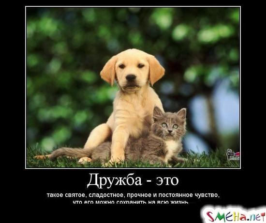Дружба это - такое святое, сладостное, прочное и постоянное чувство, что его можно сохранить на всю жизнь...