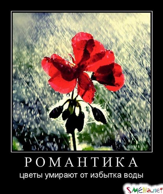 РОМАНТИКА - цветы умирают от избытка воды
