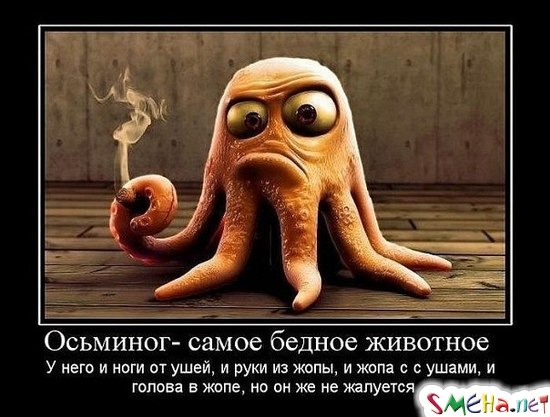 Осьминог - саме бедное животное. У него и ноги от ушей, и руки из жопа, и жопа с ушами, и голова в жопе, но он не жалуется