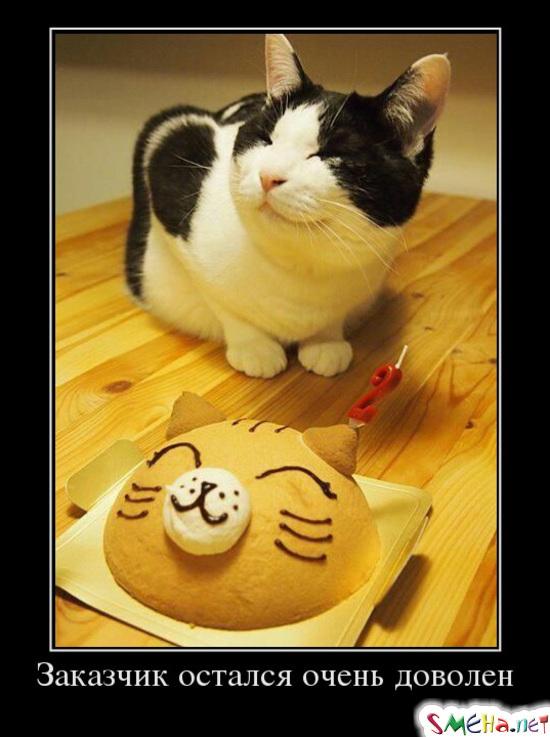 Демотиваторы с животными: коты, собаки...