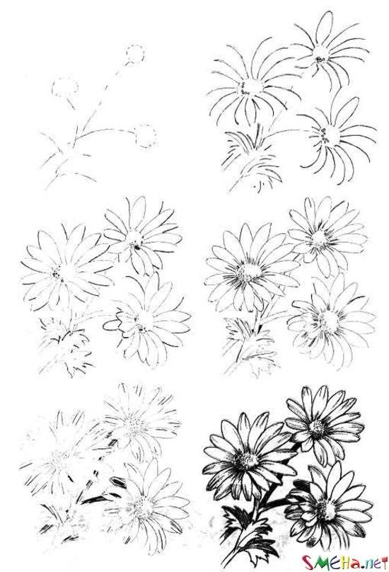 Уроки рисования - цветы