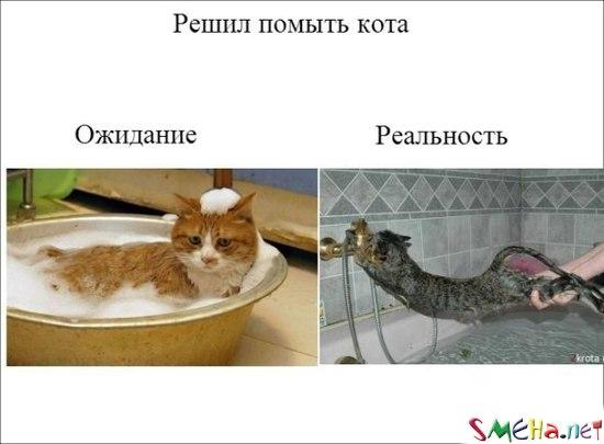 Мойка кота