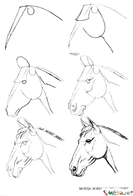 Уроки рисования в картинках на примере